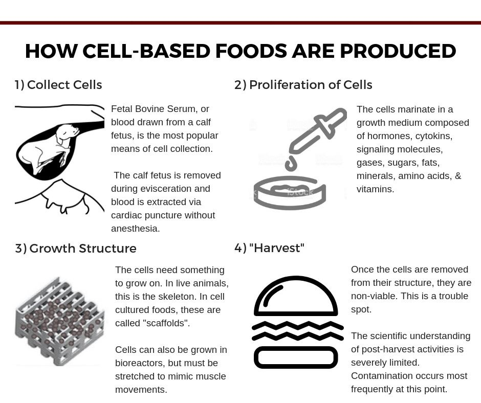 SDFU Industry Initiatives | South Dakota Farmers Union - Cell Cultured Protein