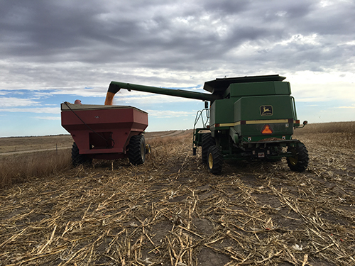 Harvest Pic To Replace Page 2 718785e2