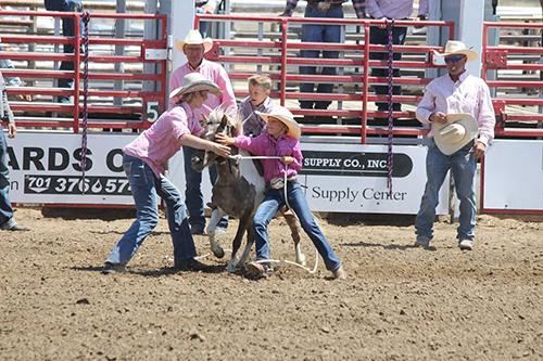 Wild Pony Races 29e3117d